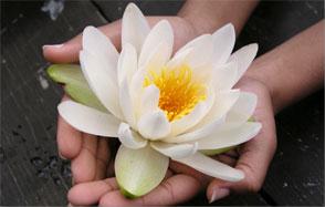 GV -flower